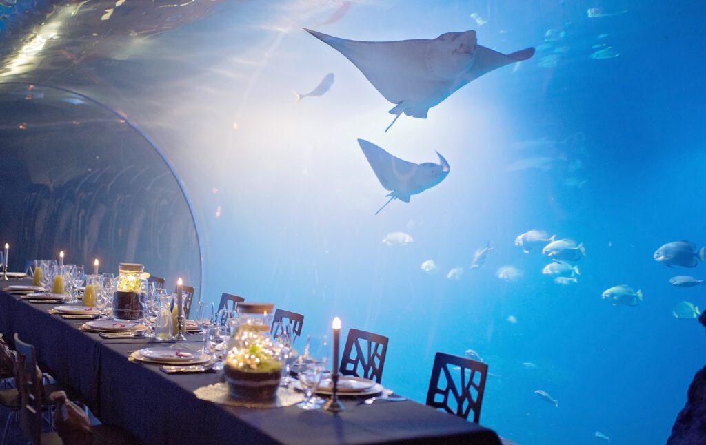 Na zdjęciu są stoliki, przy których odbywa się podwodna kolacja. Widzimy też pływające rekiny oraz ryby, które będą towarzyszyć uczestnikom tego wydarzenia.