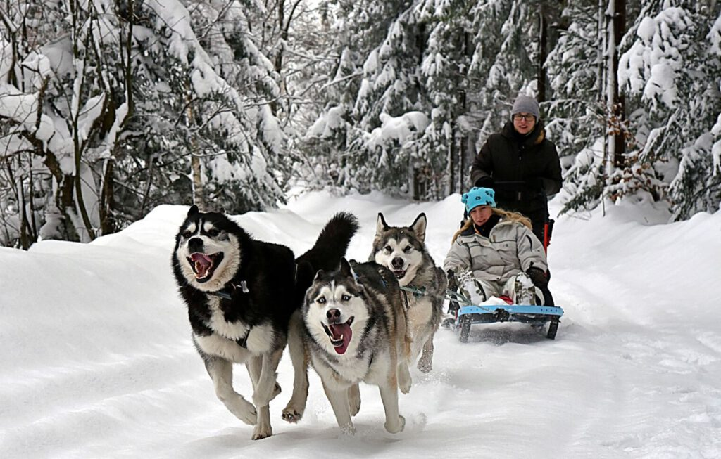 Jazda Psim Zaprzęgiem to niezwykły sport oraz świetna zabawa dla ludzi i zwierząt!