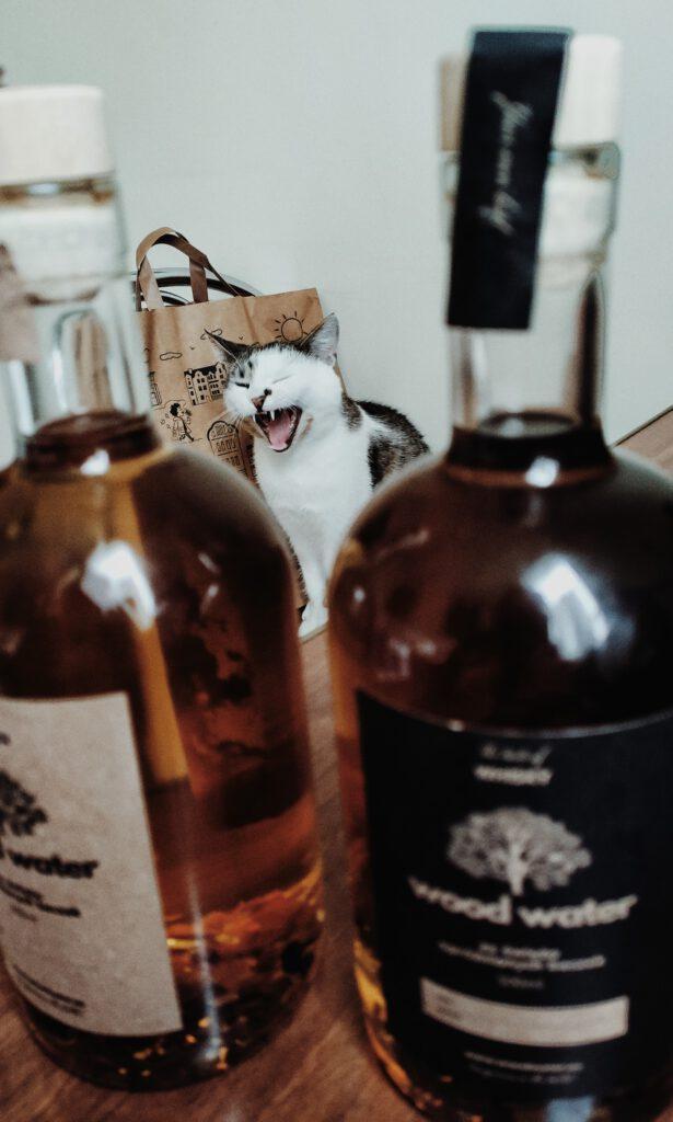 Na zdjęciu butelki z alkoholem, w tle ziewający kot. Wood Water - Stwórz Własny Alkohol i kot