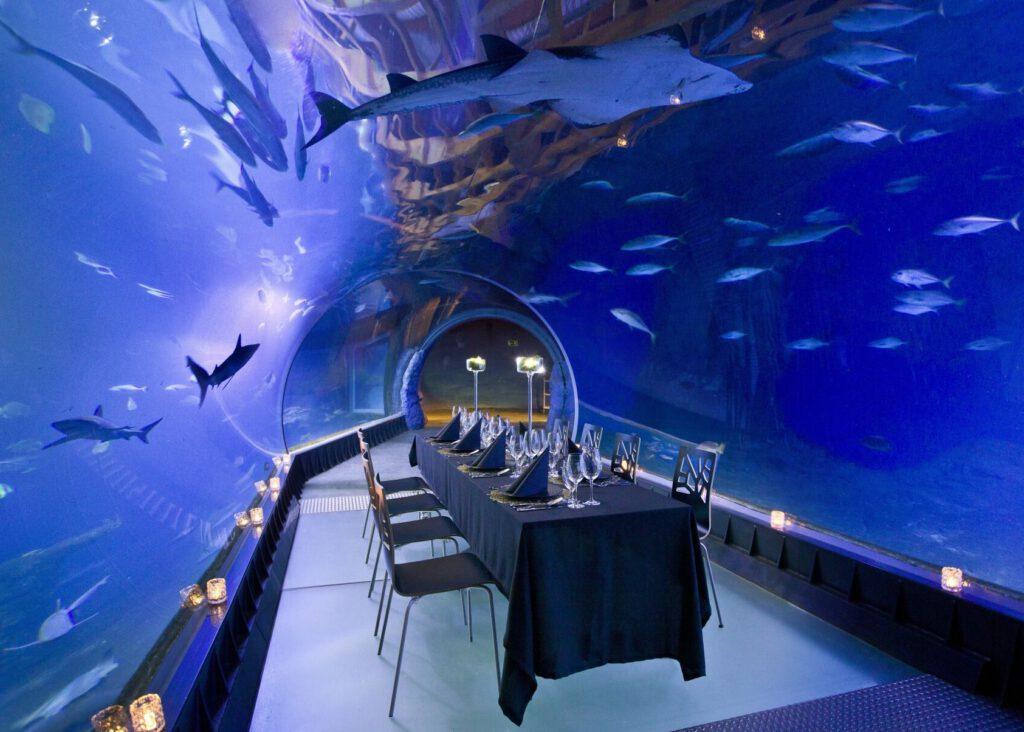 Podwodna Kolacja - unikalna kolacja w zoo we Wrocławiu to fajny prezent dla pary