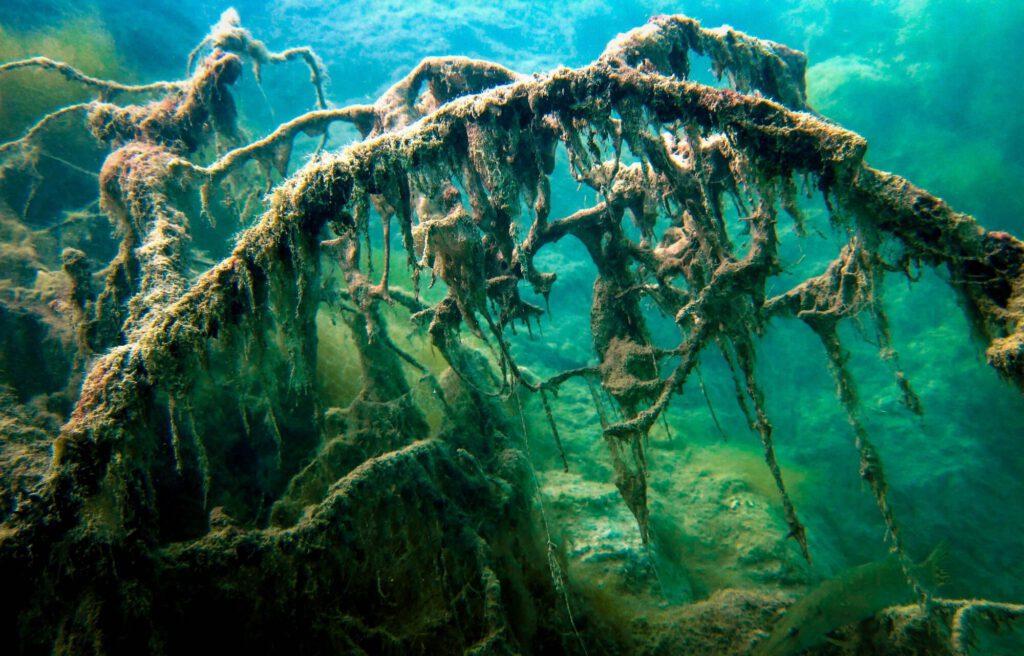 Podwodny widok podczas nurkowania.