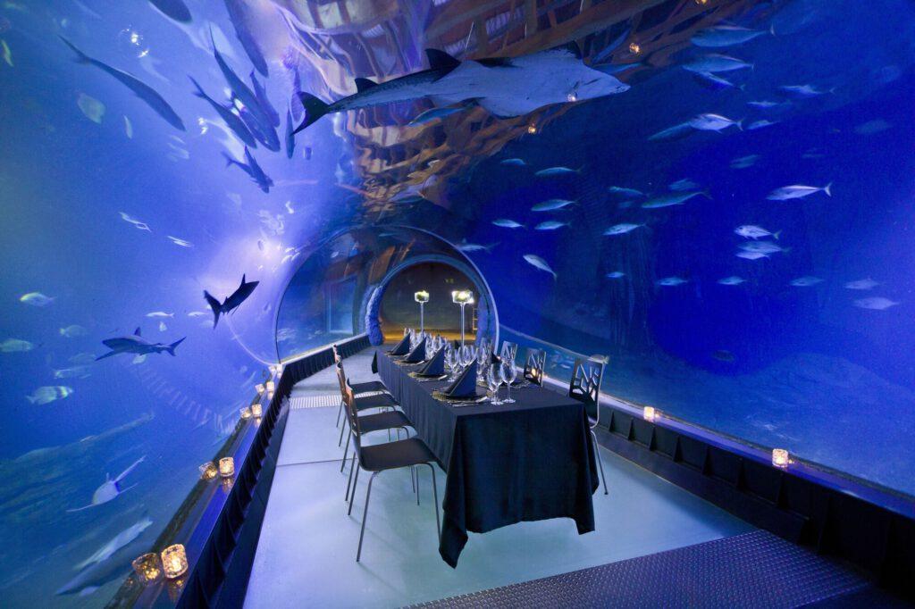 Ciekawe restauracje w Polsce - zastawiony stół stoi pośrodku kanału, w którym pływają rekiny i ryby